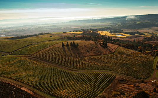 aerial-vineyard-temperance_hill
